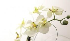 Friseur Brändle Winnenden - Blumen